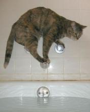 Cat on Tub Faucets